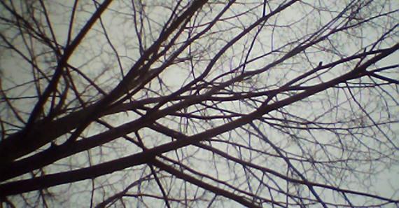tree-shot